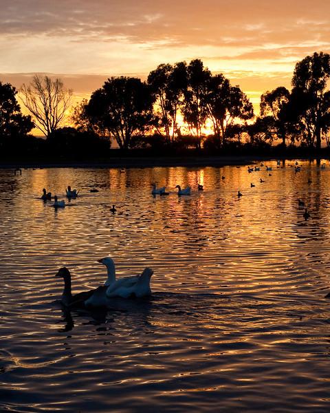 9894 Duck Pond Sunset.jpg