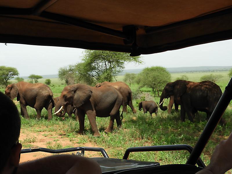 Elephants DSCN0301.jpg