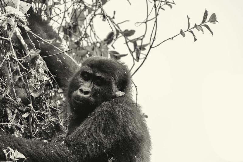 Uganda_T_Gor-1650.jpg