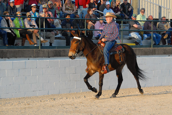 2013 Gaited Mule Show