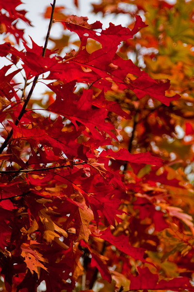 Fall Colors Brasschaat