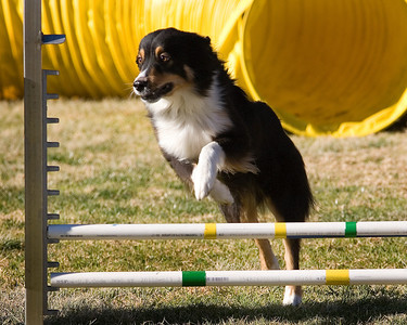 PDT Jumpers Round 1 Levels 1/2 - 12 inch