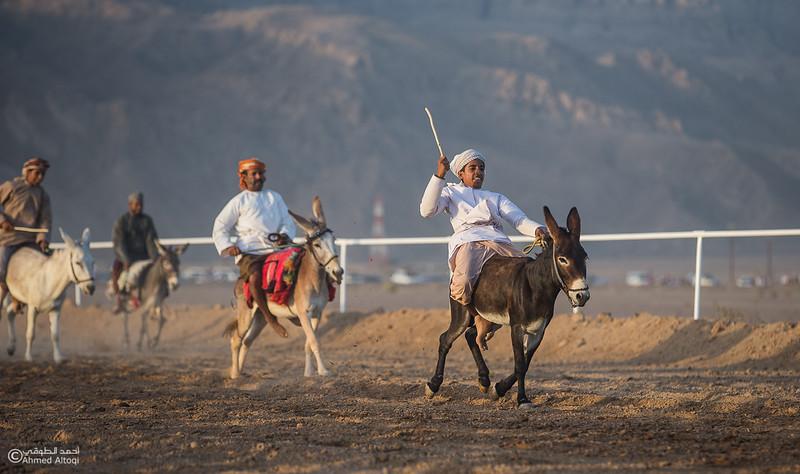 IMGL6942- Horse race.jpg