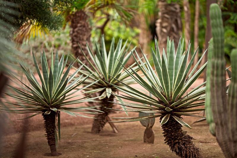 ysl garden morocco 2018 copy5.jpg