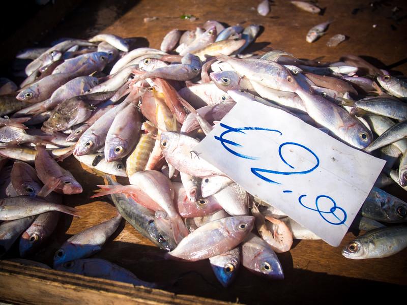 commenda fish.jpg