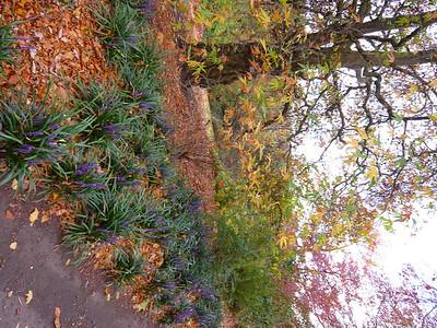 botanic garden edynburgh