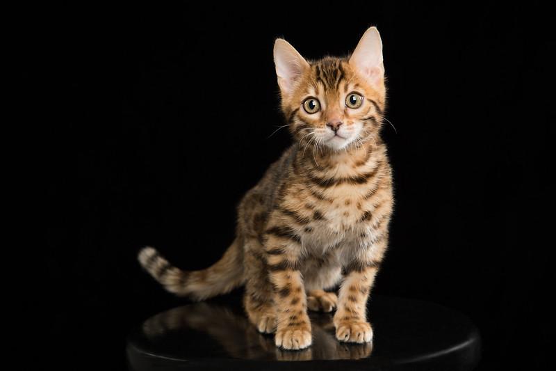 Kitten-4-Edit.jpg