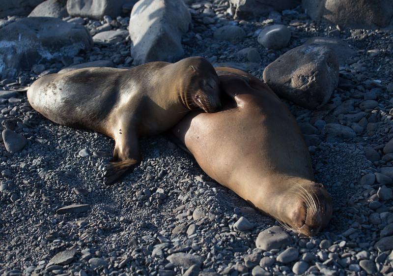 Galapagos_MG_4563.jpg