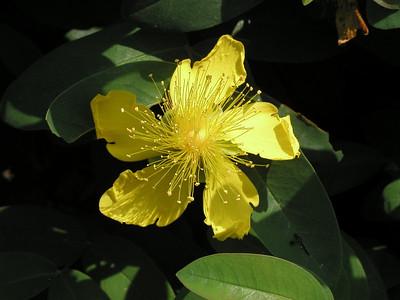Flora, Fauna & Scenic