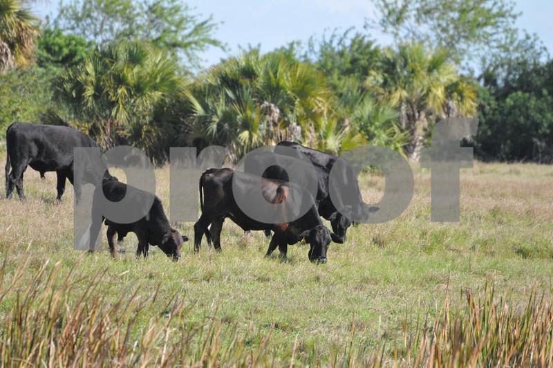 animals and landscape in FL 002.JPG