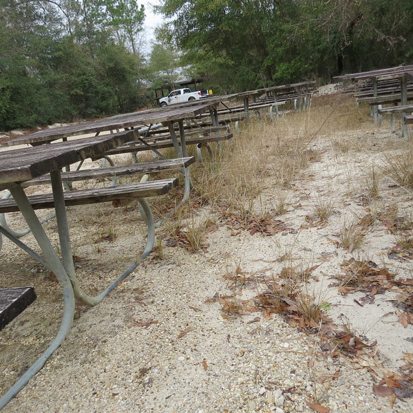 gathering of the picnic tables.JPG