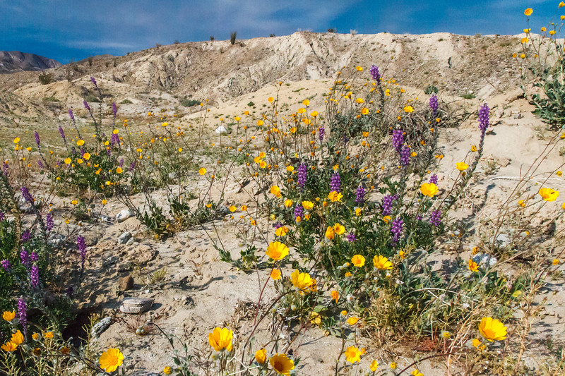 In March and April of this year we spent time out in Anza Borrego & then traveled to Saguaro Nat. Park, Big Bend Nat. Park, Guadalupe Mountains Nat. Park, Carlsbad Cavern Nat. Park, White Sands Nat. Monument,  Katchner Cavern State Park and Sabino Canyon by Tuscon.
