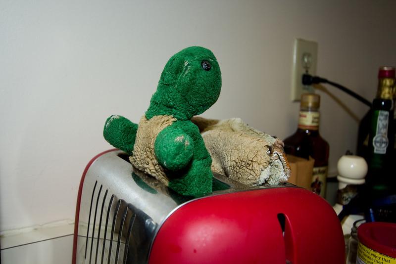 Tucker in the toaster.