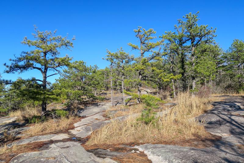 Big Rock Trail -- 3,020'