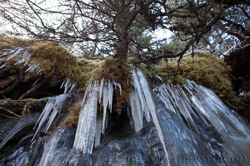 Icicles reach down below a tree near Falls Creek.