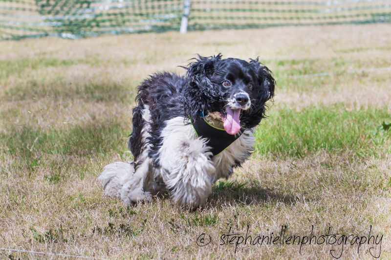 Woofstock_carrollwood_tampa_2018_stephaniellen_photography_MG_8544.jpg