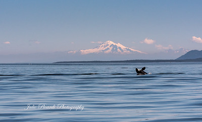Day 2 Orcas 160721