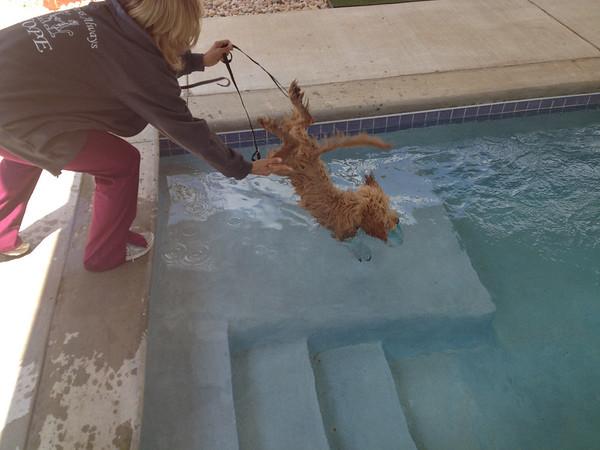 Bentley's first swim