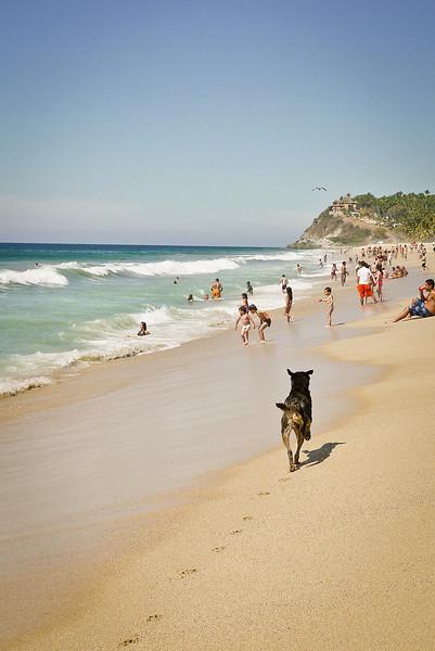 Happy dog on the beach.
