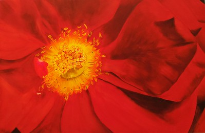 """""""Chinese red"""" (watercolor on paper) by Xiaoxia Chen"""