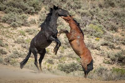 Wild Horses of Sandwash Basin Colorado