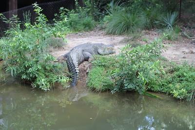 Zoo Trip July 2018