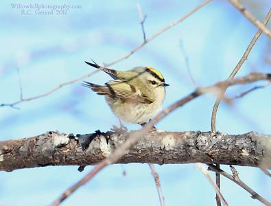 Madison Land Conservation Trust - Rettich Preserve