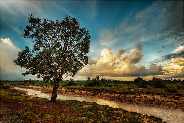 Tree Vs Cloud