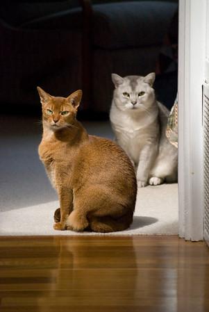 Ken & Jim's Cats