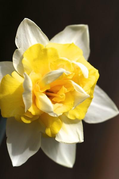 In the garden March 18, 2013