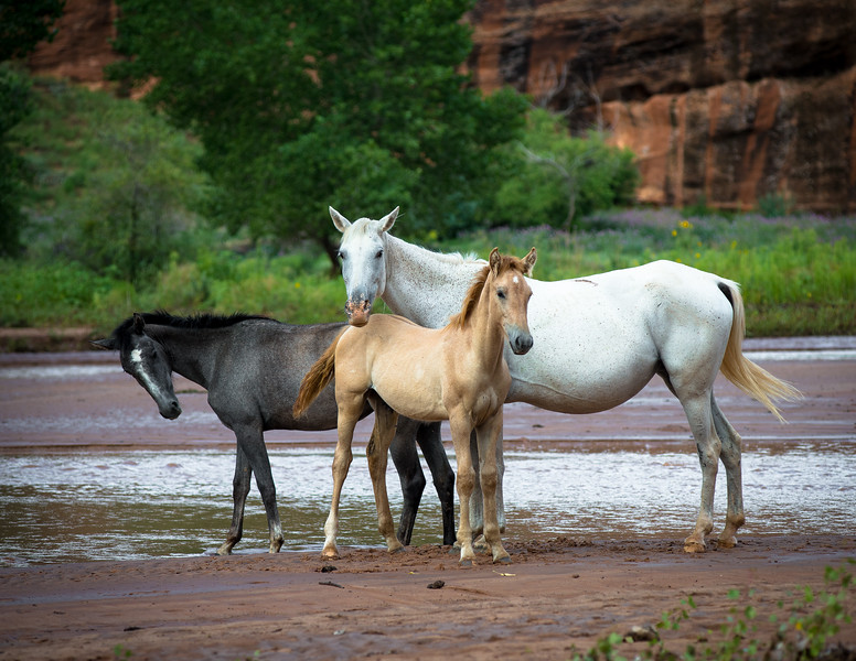 Horses, Canyon de Chelly
