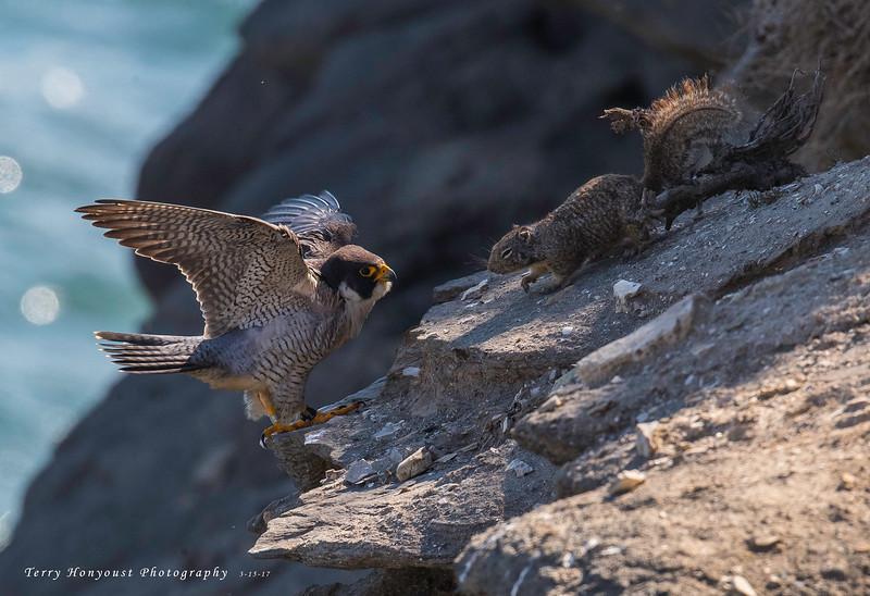 HNBH Birds1-16.jpg