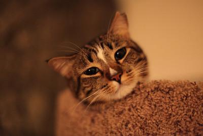 13_10-25-31 Paula/Murr cats