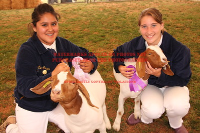 2010 LHVCF Goats