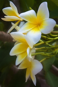 gulf coast aloha