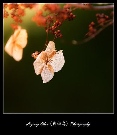 Unknown flower-13