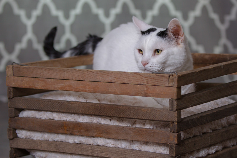 Polzin Cats-7.jpg