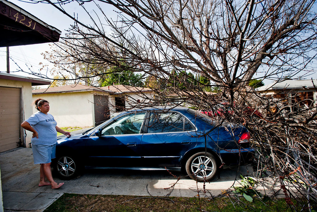 . Monica Reyes\' looks at her parked Honda Accord on her driveway after a large maple tree fell from her neighbor\'s yard and crushed a car in the 4200 block of Cogswell Rd. in El Monte on Thursday, Dec. 1, 2011. Winds gusting up to 80 miles an hour whipped through the west San Gabriel Valley overnight causing trees to snap and power lines to fall. (SGVN/Staff photo by Watchara Phomicinda/SVCity)