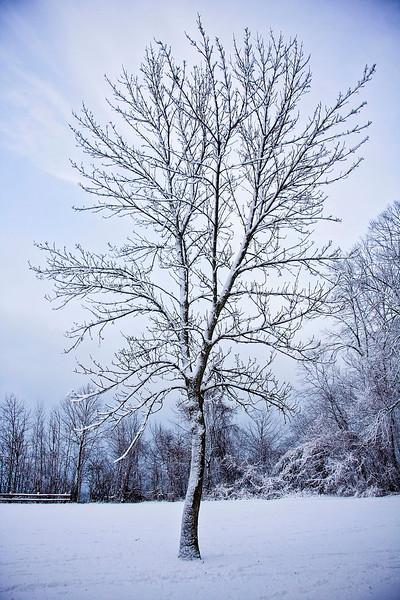 Winter Tree TBT IMG_7139.jpg