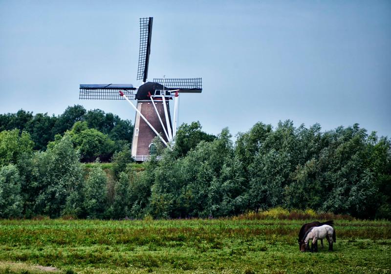 Rhine Windmill-1.jpg