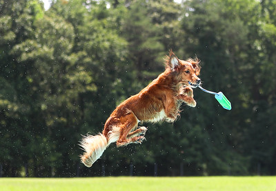 Ultimate Air Dogs Regional  - 31 July