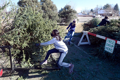 Photos: Christmas Tree Disposal in Longmont