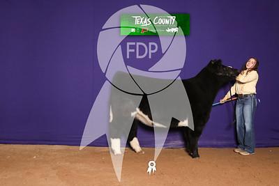 Texas County Livestock Show