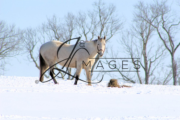 Mereworth Farm  - Winter Photographs