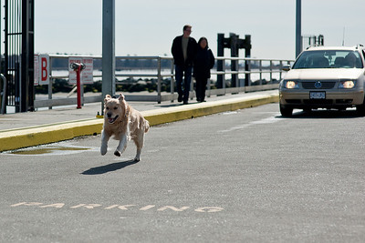 Dogs at Steveston
