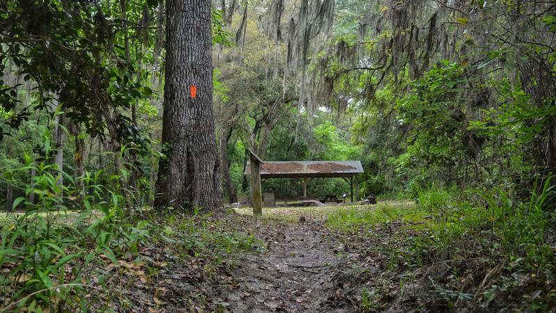 SUWANNEE Coopers Bluff campsite.jpg