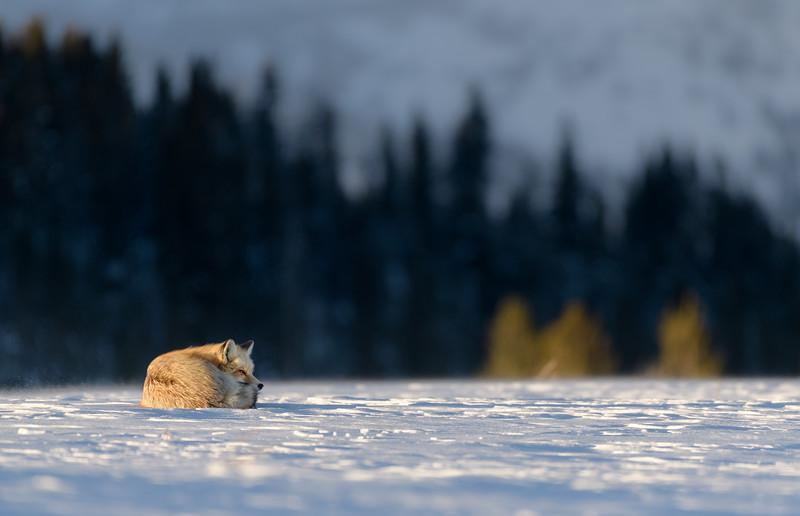 Yellowstone-_DR17258.jpg