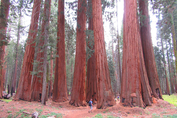 Sequoia/Kings Canyon: Sep 14-17, 2017