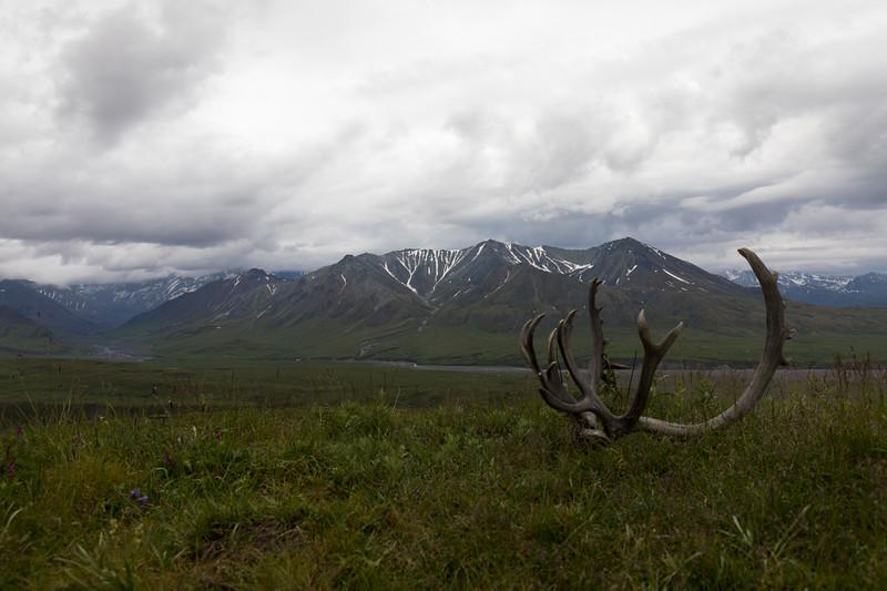 Caribou Rack