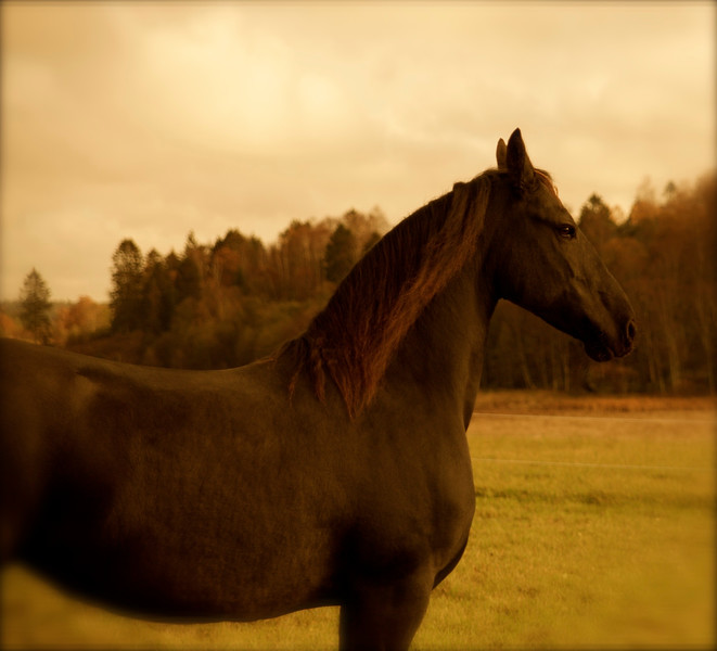 Fine Art Portrait / Horse